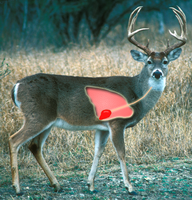 Where to shoot a deer with crossbow